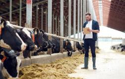 2 Sene Ödemesiz 7 Yıl Vade ile Hayvancılık Kredisi 2021