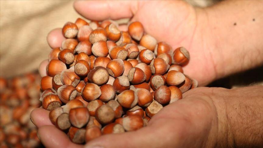 Fındık ihracatçıları kar yağışını ve soğuk havayı ürün için olumlu buldu