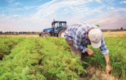 Tarım Kredisi Nedir ve Nasıl Kullanılır