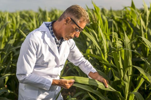 Agronomist Maaşları Ne Kadar? Nasıl Agronomist Olunur? 2021